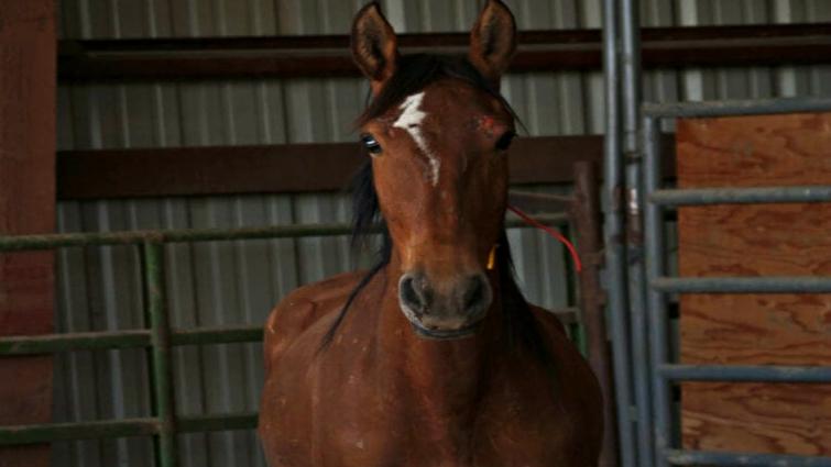 Vegan Friendly Rhinegold Elite Mustang Horse Riding Yard Trainer Ladies